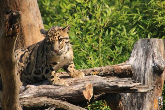 1Eigene Bilder Tierpark Friedrichsfelde 08.08.20 Bulk Watermark (16)