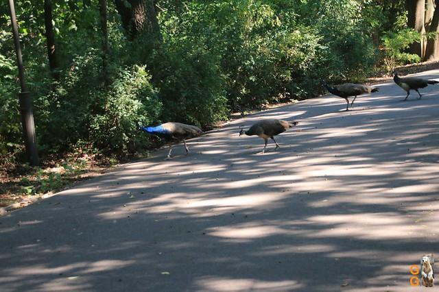 1Eigene Bilder Tierpark Friedrichsfelde 08.08.20 Bulk Watermark (15)
