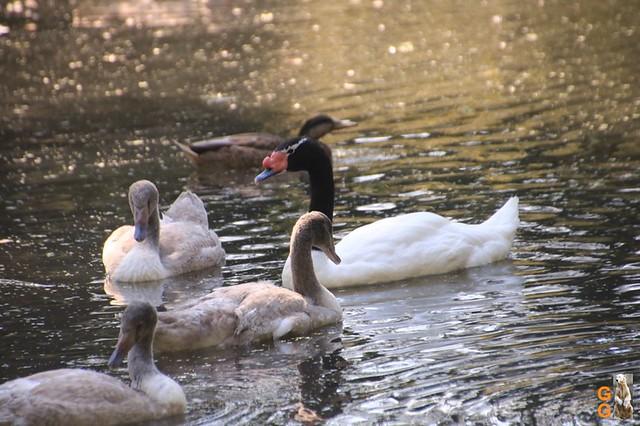 1Eigene Bilder Tierpark Friedrichsfelde 08.08.20 Bulk Watermark (14)
