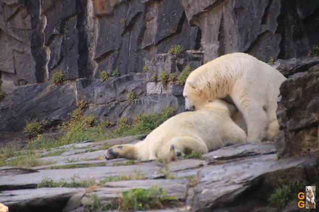 1Eigene Bilder Tierpark Friedrichsfelde 08.08.20 Bulk Watermark (8)