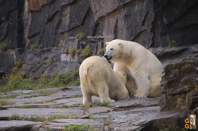 1Eigene Bilder Tierpark Friedrichsfelde 08.08.20 Bulk Watermark (7)