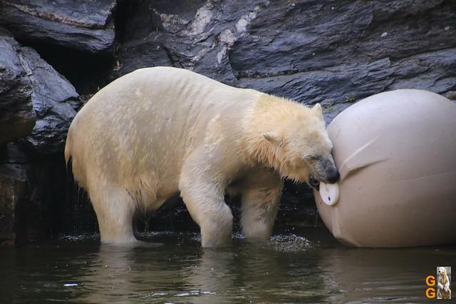 1Eigene Bilder Tierpark Friedrichsfelde 08.08.20 Bulk Watermark (6)