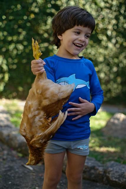 Diego e a galinha