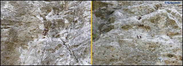 Penyes de Can Marcer -02- Sector Izquierda -03- Material Antiguo
