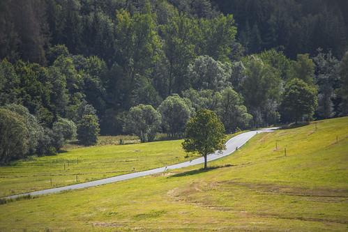 street strase landstrase baum tree landschaft landscape canon eos 6d mk mark 2 ii