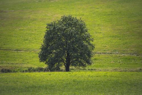 alone tree natur nature landscape landschaft baum canon eos 6d mark 2 mk ii
