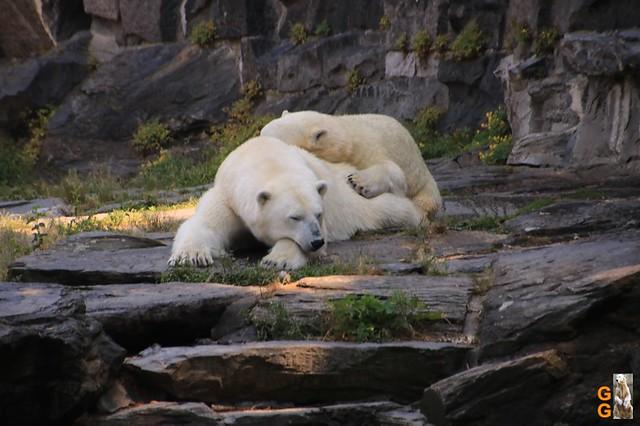 1Eigene Bilder Tierpark Friedrichsfelde 08.08.20 Bulk Watermark (45)