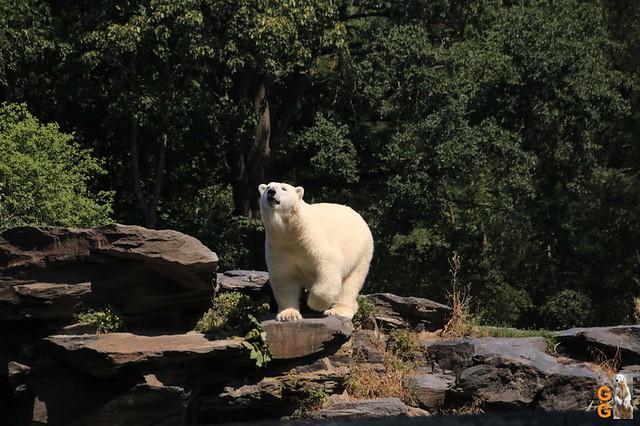 1Eigene Bilder Tierpark Friedrichsfelde 08.08.20 Bulk Watermark (41)