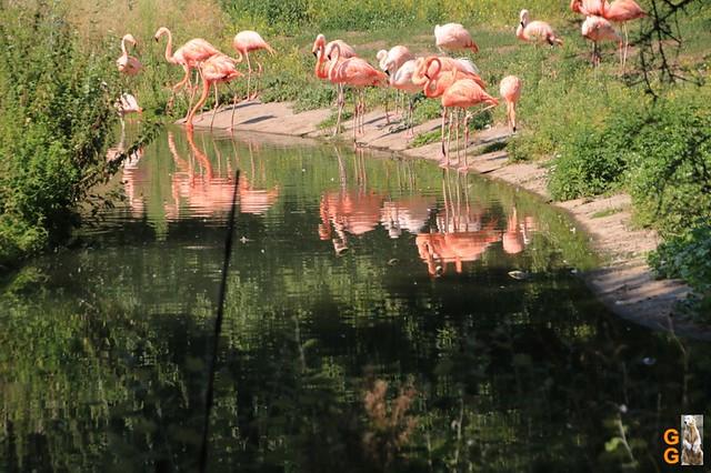 1Eigene Bilder Tierpark Friedrichsfelde 08.08.20 Bulk Watermark (39)