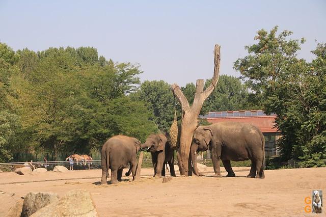 1Eigene Bilder Tierpark Friedrichsfelde 08.08.20 Bulk Watermark (32)
