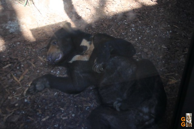 1Eigene Bilder Tierpark Friedrichsfelde 08.08.20 Bulk Watermark (29)