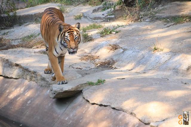 1Eigene Bilder Tierpark Friedrichsfelde 08.08.20 Bulk Watermark (27)