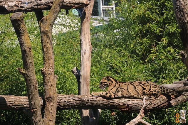 1Eigene Bilder Tierpark Friedrichsfelde 08.08.20 Bulk Watermark (17)