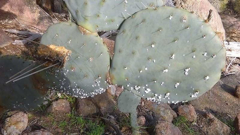Wheel Cactus - Mick Webster