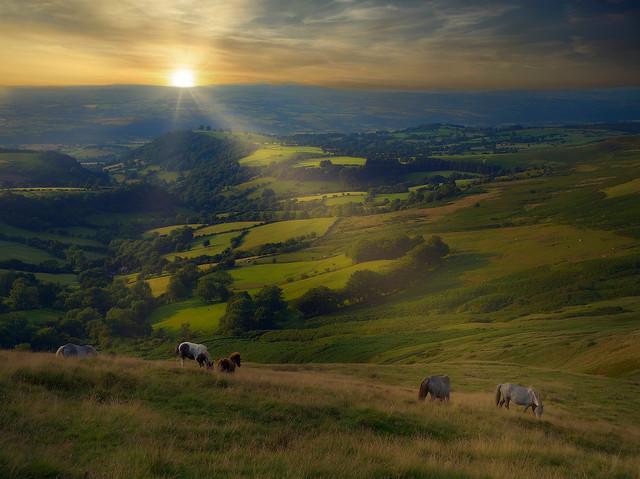 Wild Ponies of the Brecon Beacons