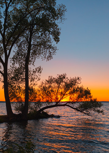 davidhoefler trees sunset summer wallpaper nature water vertical wisconsin outside outdoors midwest background nopeople madison canonef2470mmf28lusm lakemendota canoneos5dmarkiv