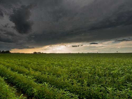 storm tempête cloud clouds nuage nuages field champs canada ontario green vert thunder orage landscape paysage country campagne olympus em5markii mzuiko818mm sun soleil coucherdesoleil sunset afternoon aprèsmidi farm ferme