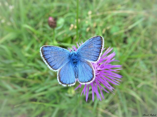 Butterfly 2042