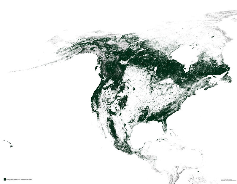 Map of needleleaf forests of North America