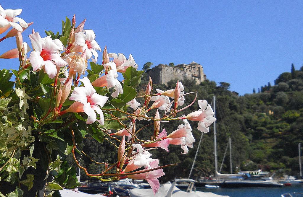 Portofino. LIguria. Italia