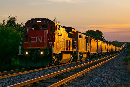bnsf empty grain train cn canadian national ge c408 c408m sunset glint harwood siding tx texas up glidden sub railroad
