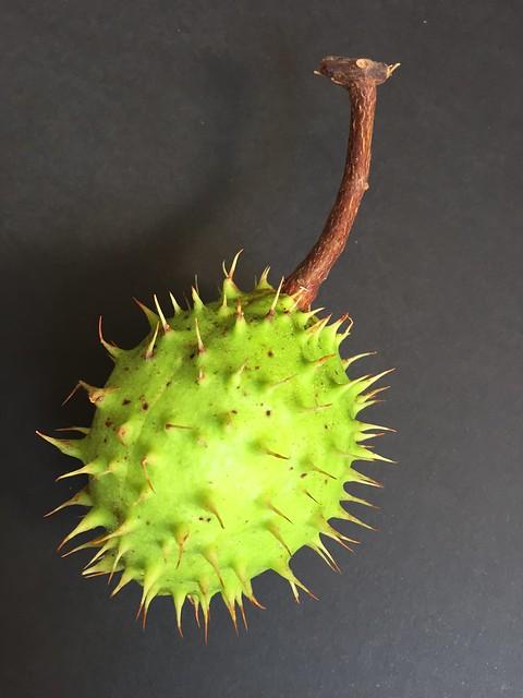 Mutation - will it go viral?