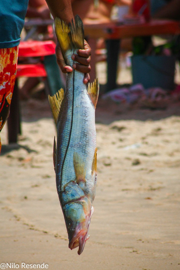 O pescado