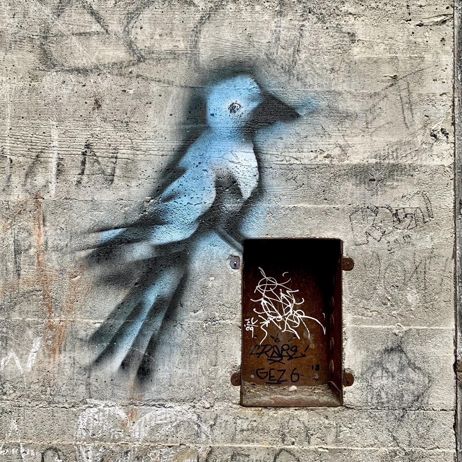 Wayward blue jay