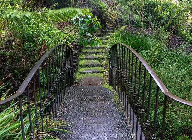 Stairway to ferns