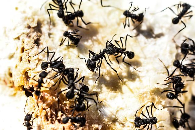 Aquí llegaron las hormigas // Here came the ants