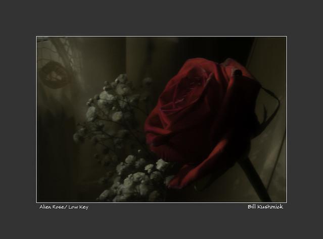 Alien Rose/ Low Key