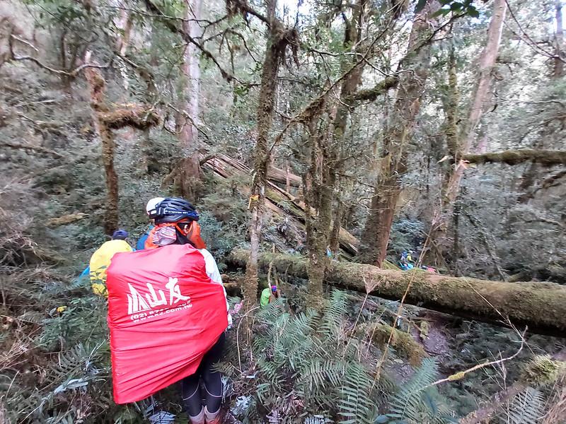 Smangus- a hiker wearing a helmet in front of fallen trees