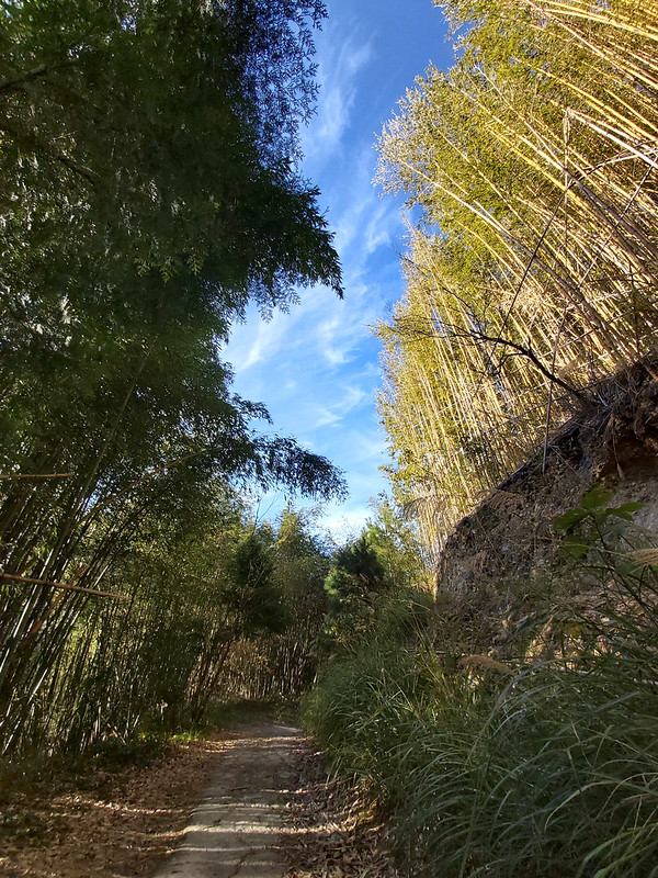 Smangus- slender bamboo woods