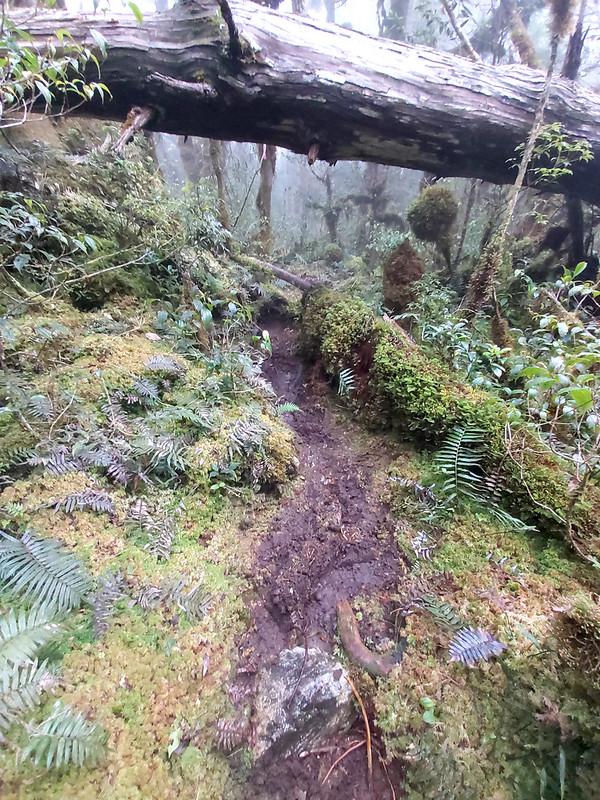 Smangus-mushy and slippery trail