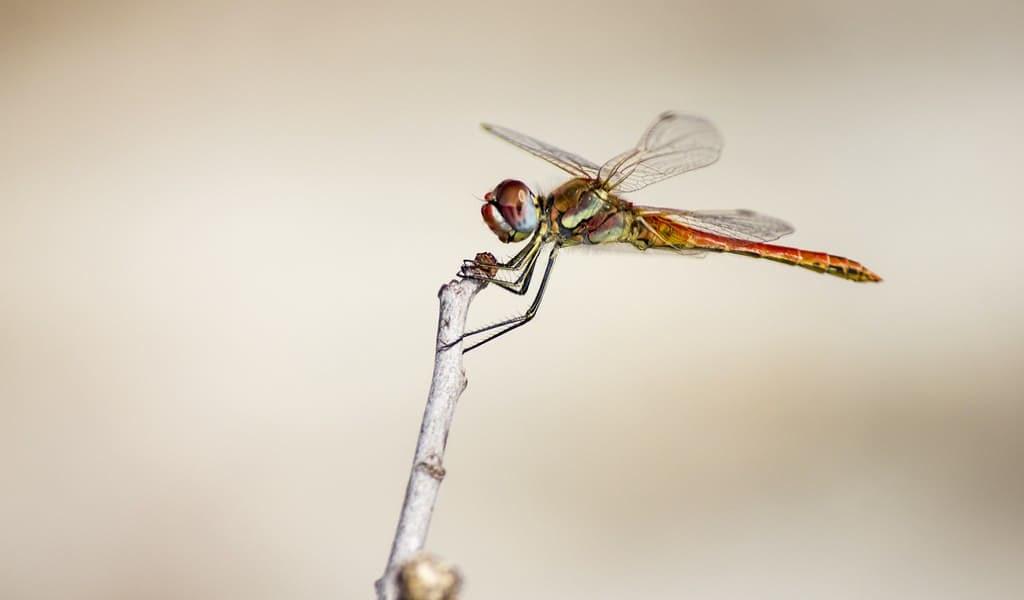 les-ailes-des-insectes-pour-lutter-contre-les-superbactéries