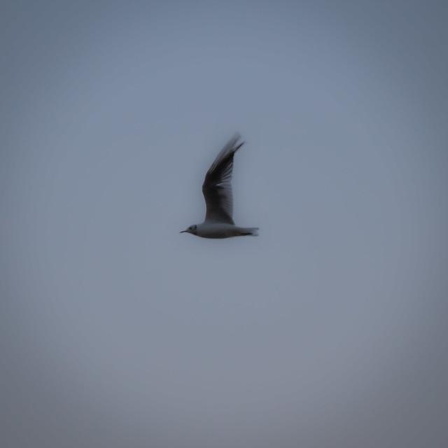 Blurred seagull