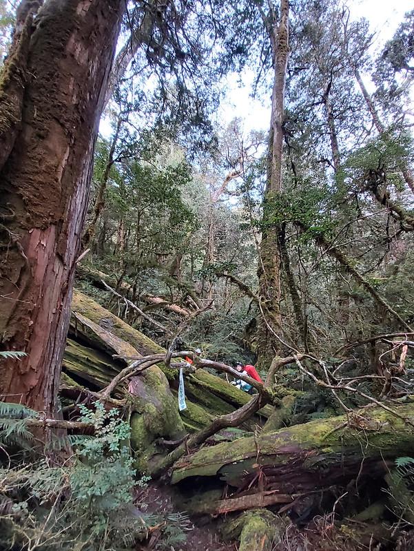 Smangus-tree cemetery