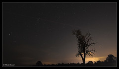 Mars, Pleiades, Strix & my favourite tree