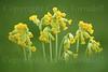 Wild Flowers thumbnail