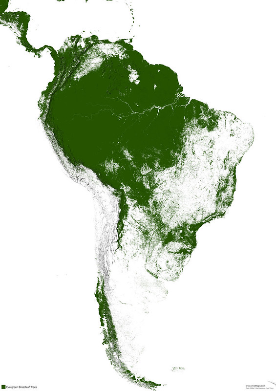 Evergreen broadleaf forests of South America