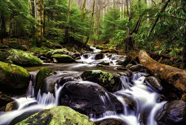Fond Memories of an Oregon Stream 3456