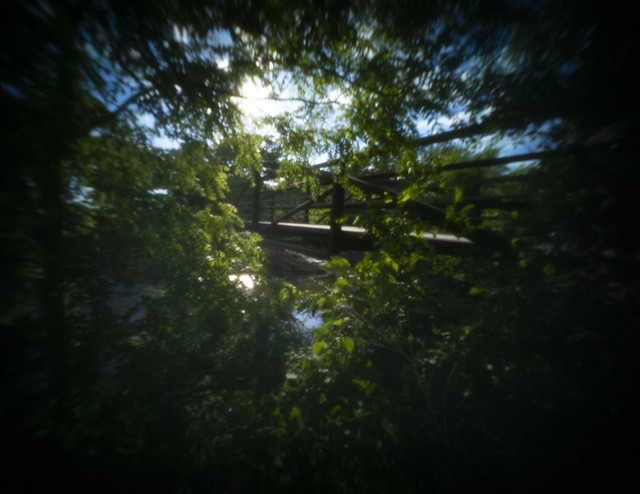 Bridge Through Trees