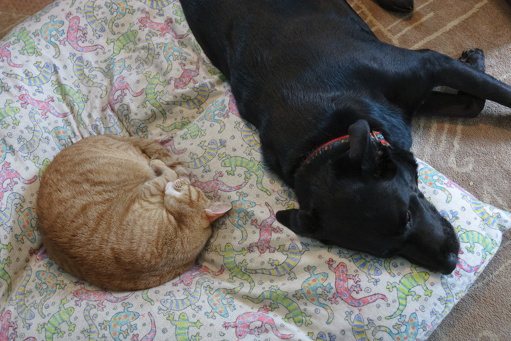 Our cat Sam and our dog Ellie sleeping on Ellie's bed in June 2009. Original: _MG_4982.cr2