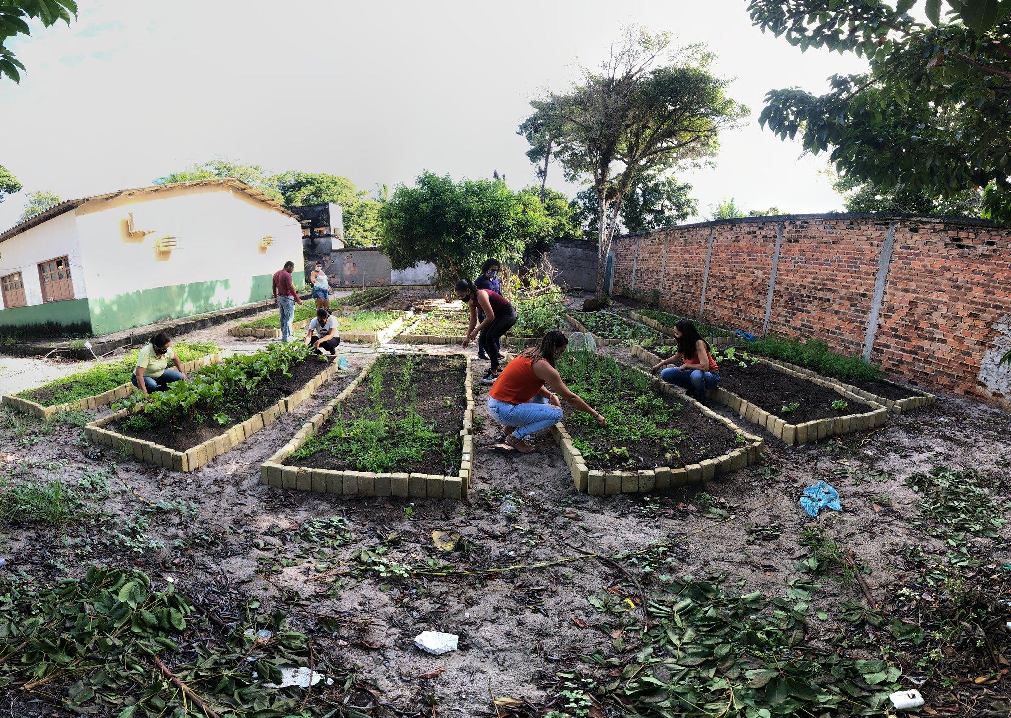 Horta comunitária em Alcobaça