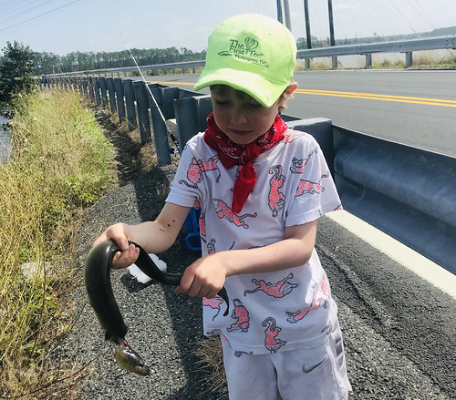 Photo of boy holding an eel