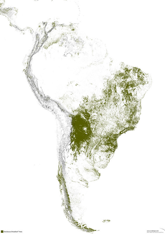 Deciduous broad-leaf forests of South America