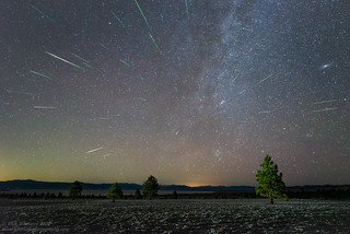 Pines and Perseids For FB