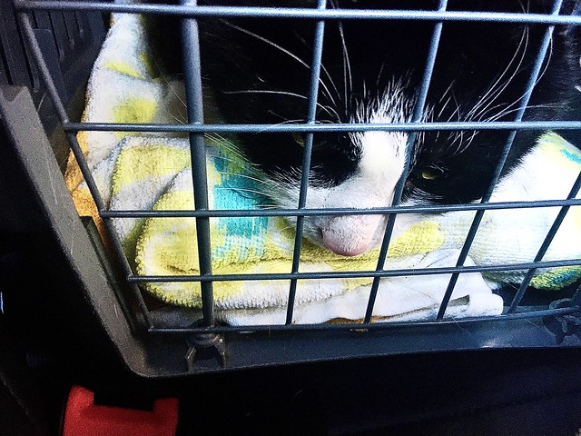 I am ok ... no Need to see the Vet