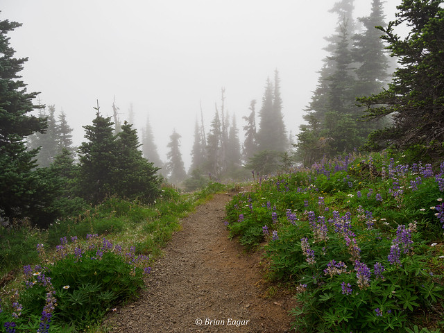 Walking through the clouds and the lupines - HR