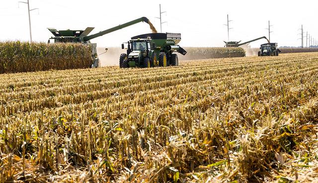 2020 Corn Harvest